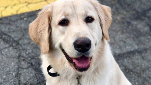 Dog Training Green Bay
