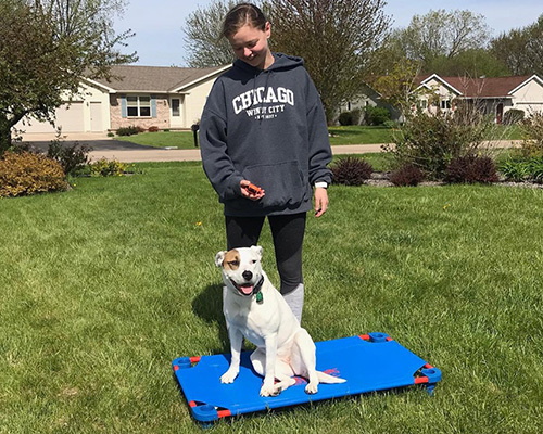 Dog Training Results