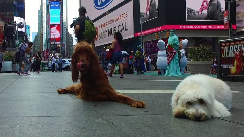 Dogs Off Leash in Times Square